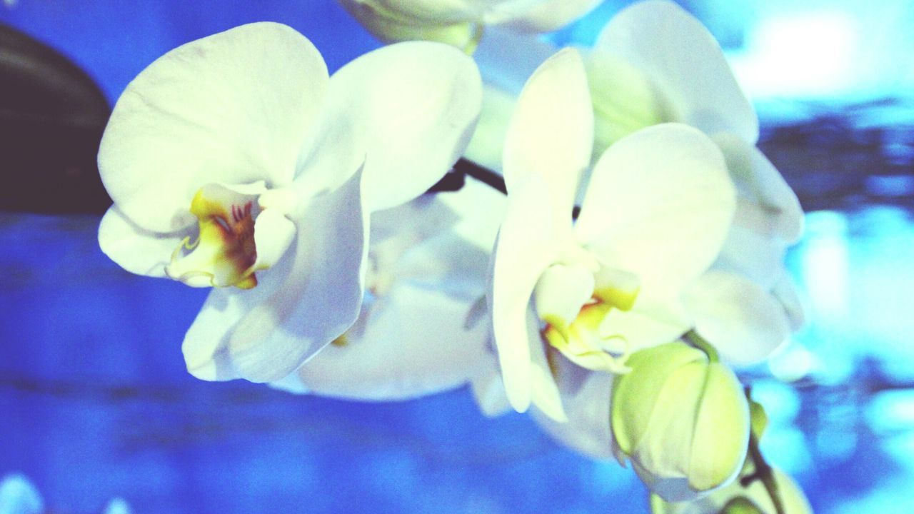 Flower Beauty In Nature Lifestyles Orchidslover Klarheit Eyeemphotography February Theme EyeEmNewHere Street Photography EyeEm Gallery February Good Day Популярное Sweet♡ February Colours Vintage Style Abstract Photography