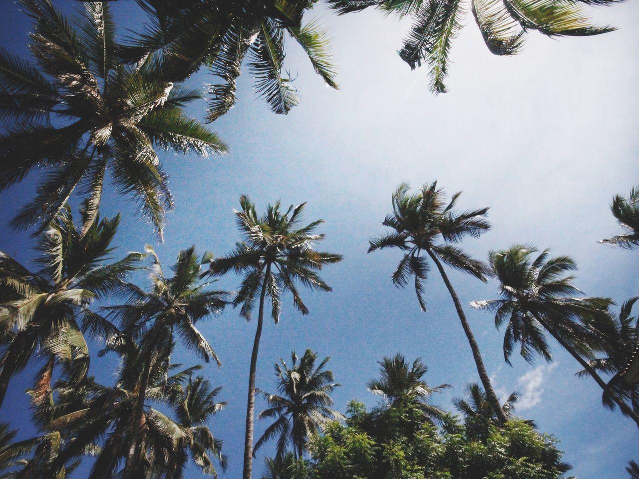 The delights of Watamu - Palm Tree Wideangle Canonphotography Canon60d Tranquility Bestoftheday BestofEyeEm Watamu Kenya Indian Ocean Kenyancoast Sallystevens Tree KeeplookingUp Excotic