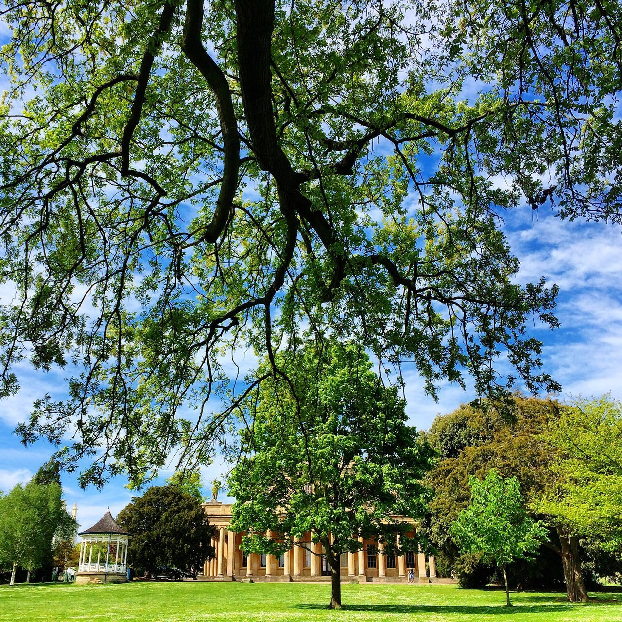 Cheltenham Pittville Park Garden Tree Nature Landscape Field Outdoor Green