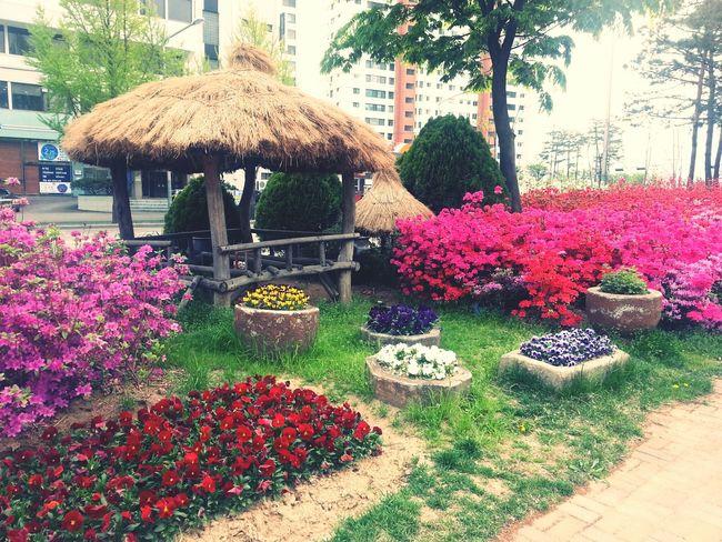 집앞ㅡ서정적이군.좋아 Spring Seoul_korea