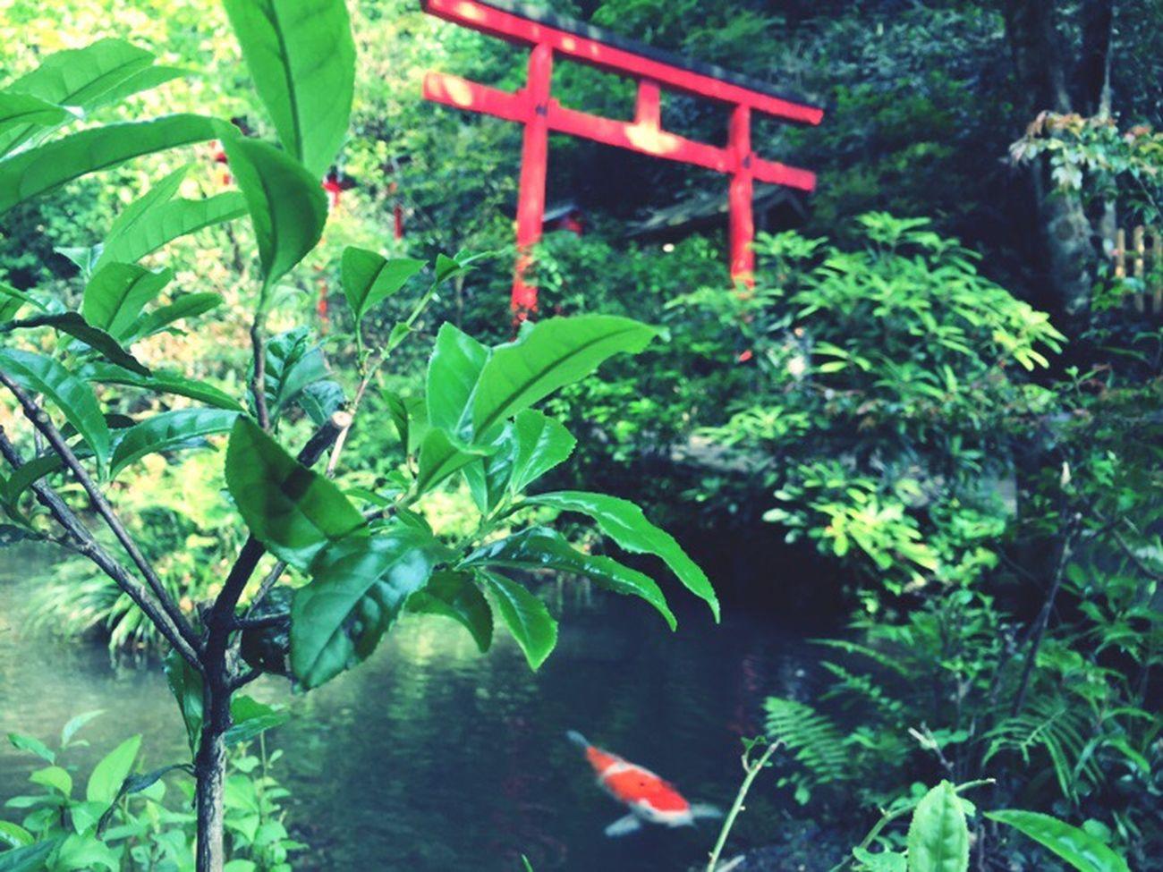 篠栗南蔵院 Plant Nature Growth Leaf Green Color Outdoors No People Day Water Beauty In Nature Fukuoka Fukuoka,Japan