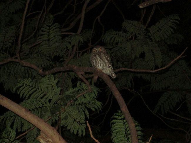 Getting Inspired Nature Amazing_birds