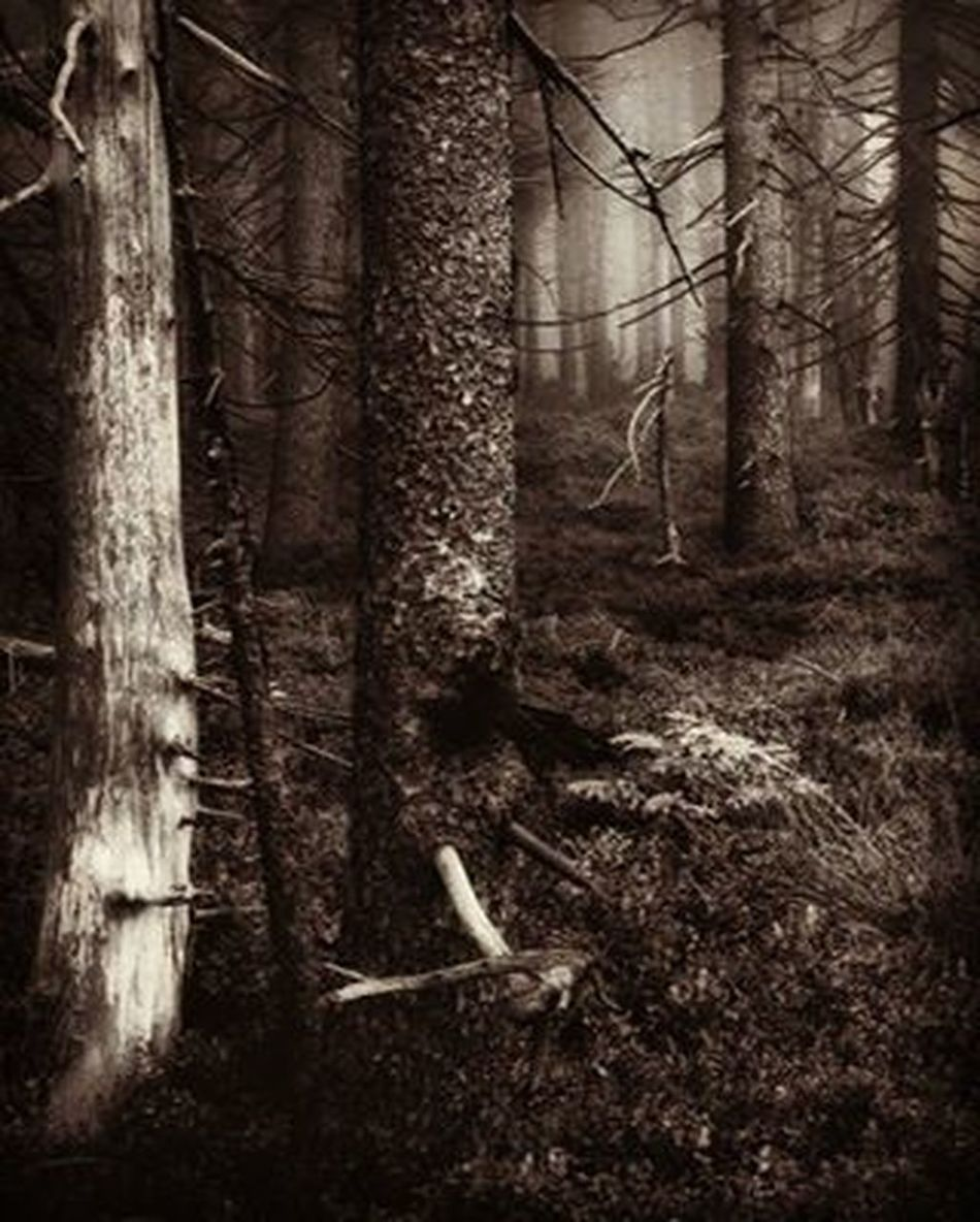 Match_bw Bw_lover Dark_nature Best_bnw_archive Bnw_captures Nature Naturelovers Insta_bw Pocket_bnw Srs_bnw Rsa_bnw Like4like Likeforlike Ayad_bnw Moonlight Wood Darkness Darkwood Night Trees Forest Ig_photography Foto_naturel