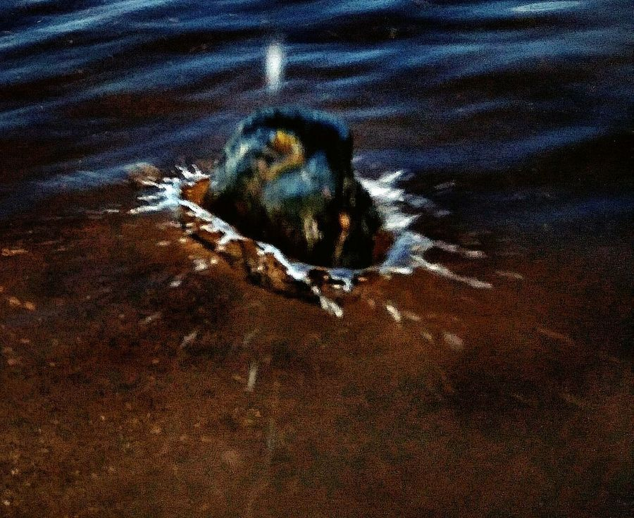 Sand Water Nature Beach High Angle View Day No People Outdoors Puddle Bird Animal Themes Close-up Splash