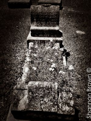 Graveyard Beauty by Shannon Brown