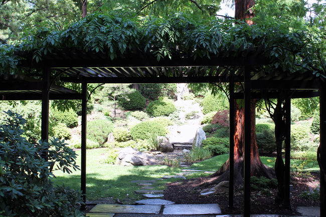 Asian Garden Beauty In Nature Botanical Gardens Day Garden Green Growth Lush Foliage Nature No People Outdoors Peaceful Plant Pretty Relaxing Serene Tranquil Scene Tranquility Trestle Zen