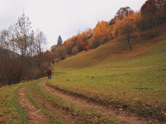 Autumn touch...Aesthetic score on The Roll app: 97%... Nature Landscape Natural Light Emptiness Tranquility Vscocam My Favorite Photo Found On The Roll The Way Forward Country Road Made In Romania Adventure Hiking Hikingadventures Dirt Road Unrecognizable Person Tranquil Scene Mountain Range Mountain View Beauty In Nature Autumn Autumn Colors Colour Of Life Color Palette What's On The Roll