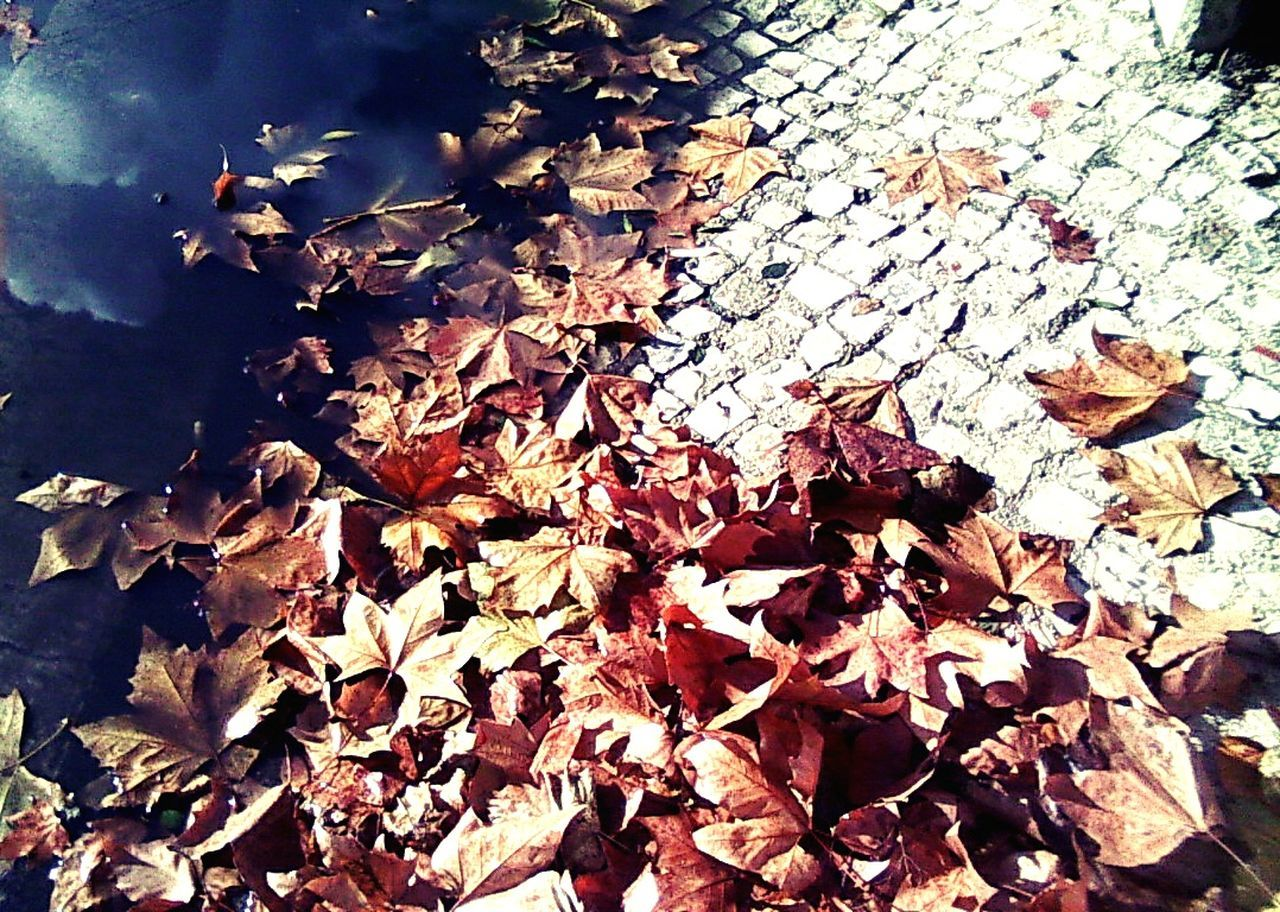 autumn, leaf, change, leaves, nature, dry, maple leaf, beauty in nature, fallen, outdoors, maple, tranquility, no people, day, close-up, fragility