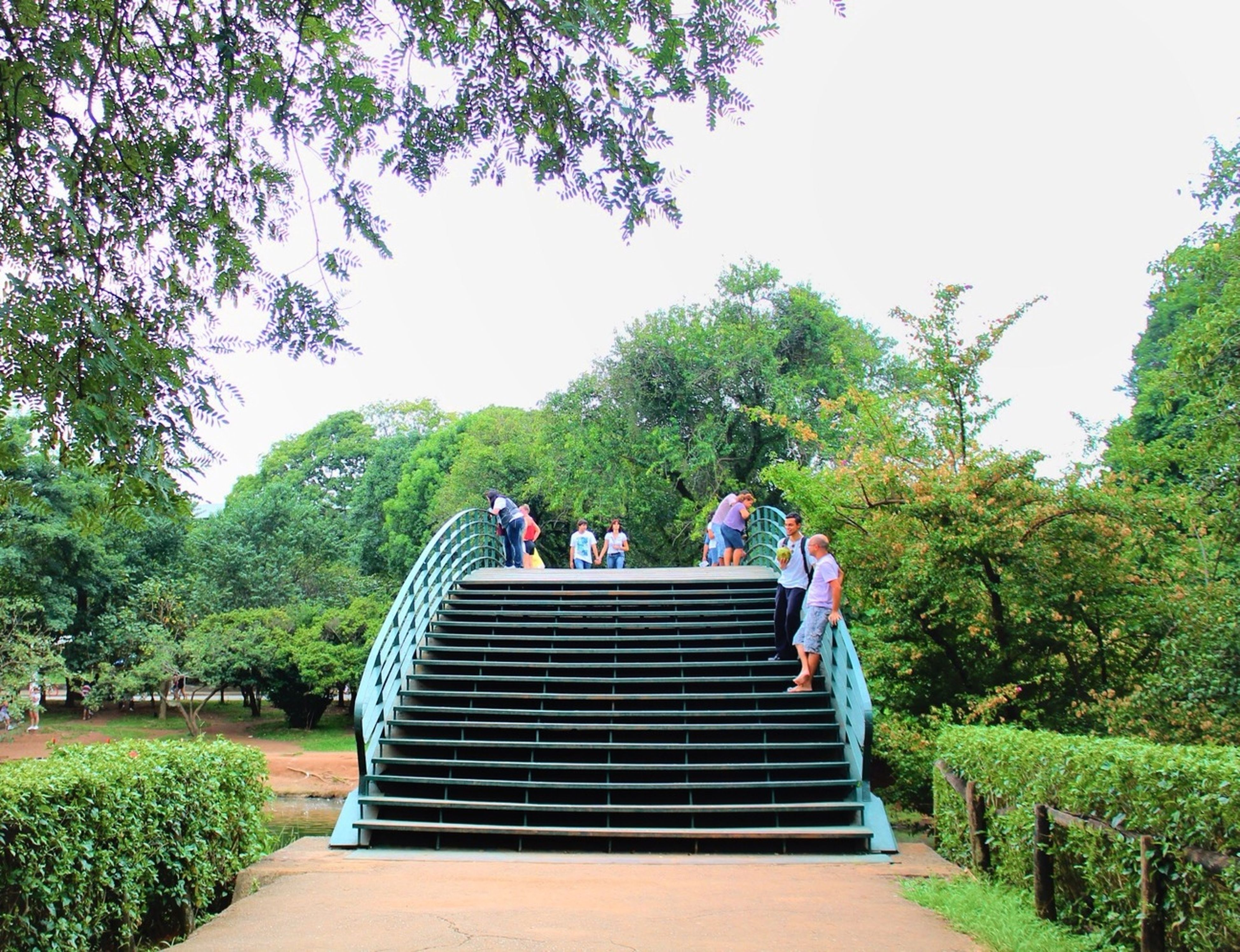 steps, tree, men, steps and staircases, person, lifestyles, leisure activity, staircase, the way forward, railing, clear sky, stairs, walking, built structure, tourist, togetherness, growth, rear view