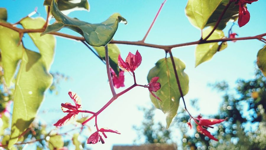 L'oiseau El Pájaro Leaves Nature