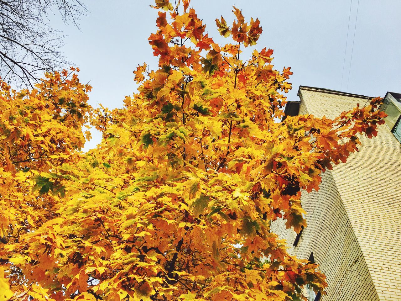 autumn, leaf, change, tree, building exterior, architecture, growth, nature, day, outdoors, built structure, orange color, no people, low angle view, house, beauty in nature, plant, branch, sky, flower, close-up