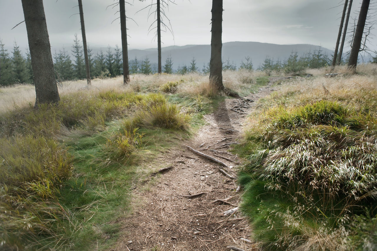 Footpath In Forest Against Sky