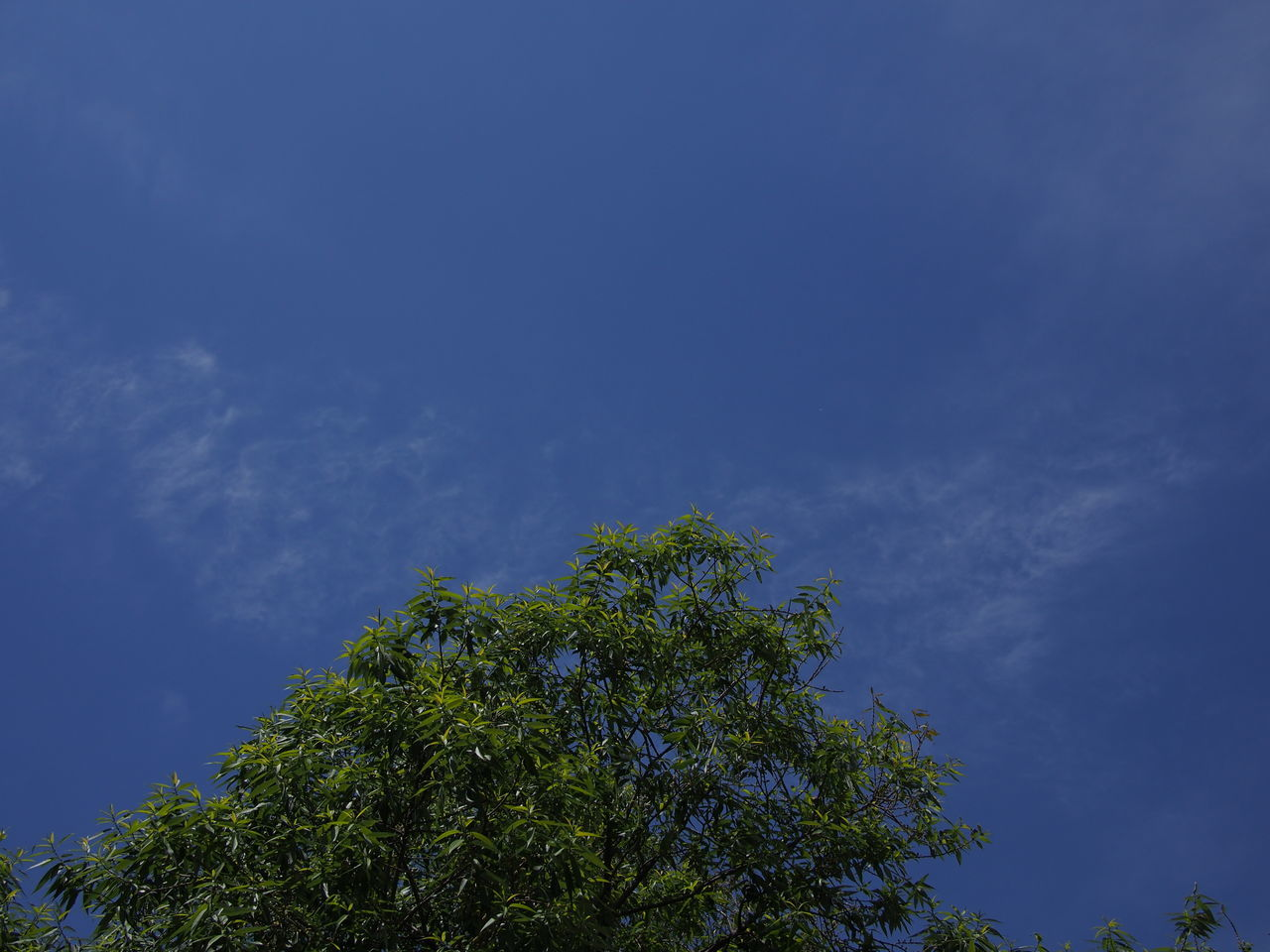 tree, low angle view, nature, beauty in nature, blue, day, growth, tranquility, sky, no people, outdoors