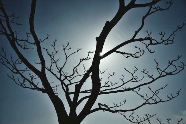 Hello World Good Morning ☺ Tree_collection  Tree And Sky Tree And Sunlight Landscape_photography Backlight Taking Photos Outdoors, Outside, Open-air, Air, Fresh, Fresh Air, Great Outdoors - 2016 EyeEm Awards Taking Photos Nature Of Korea Check This Out Have A Nice Day Friends 😚