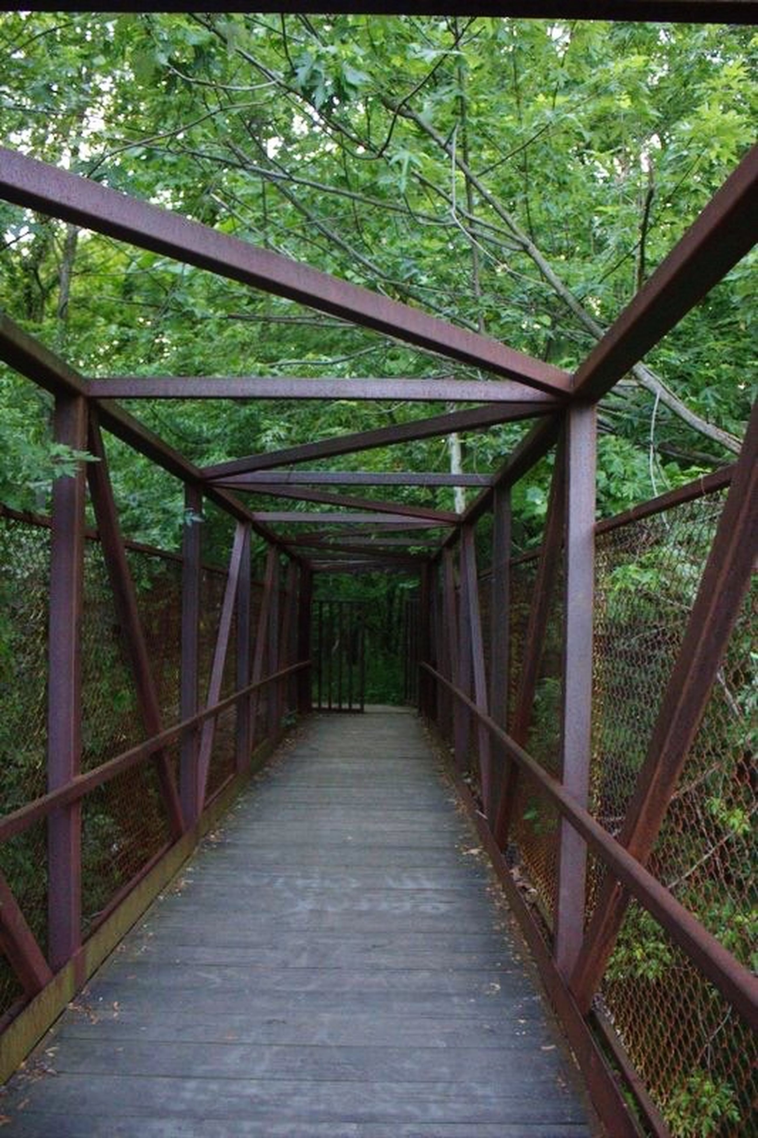 the way forward, tree, railing, footbridge, diminishing perspective, connection, wood - material, growth, built structure, bridge - man made structure, tranquility, forest, metal, nature, vanishing point, fence, day, wooden, no people, sunlight