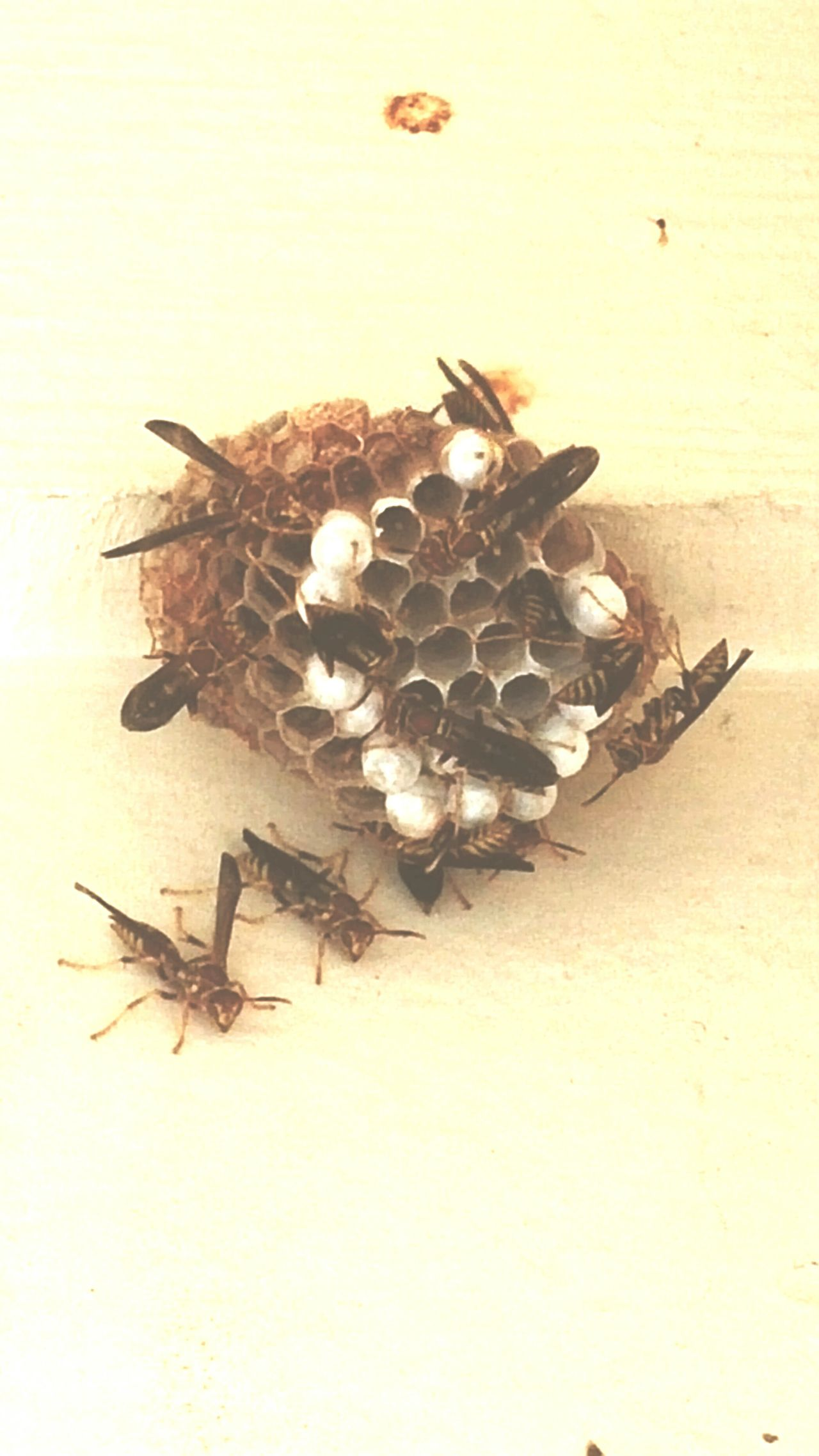Wasps Nest High Angle View Insect Porch nature Nature_collection