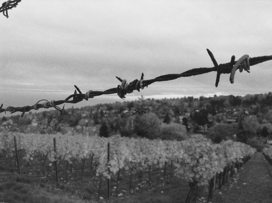 Barbed Wire Black & White Black And White Blackandwhite Close-up Fence Fences Fences & Beyond Field Focus On Foreground Metal Nature Nature_collection No People Outdoors Remote Vineyard Vineyards