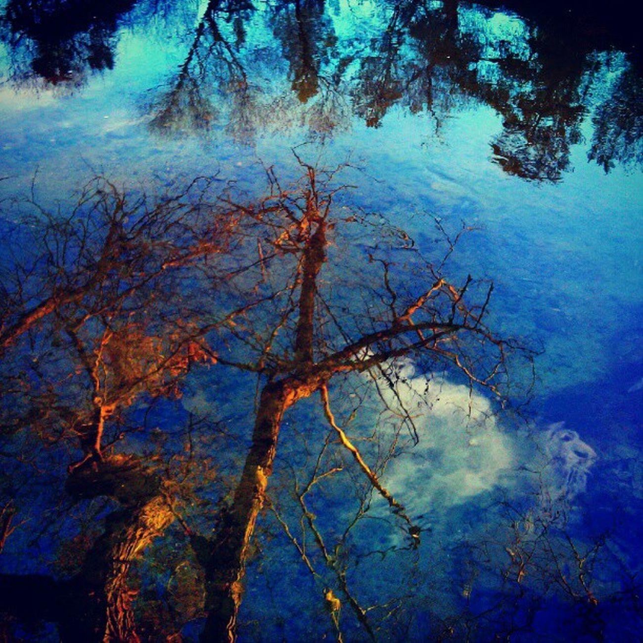 Reflection Water Lake Stream Landscape Waterscape Creek Wintersca Winters Putahcreek Contrast Blue Orange Tree Branch