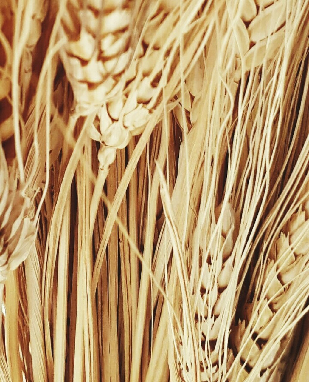 full frame, cereal plant, close-up, wheat, backgrounds, no people, nature, agriculture, food, day, outdoors, freshness