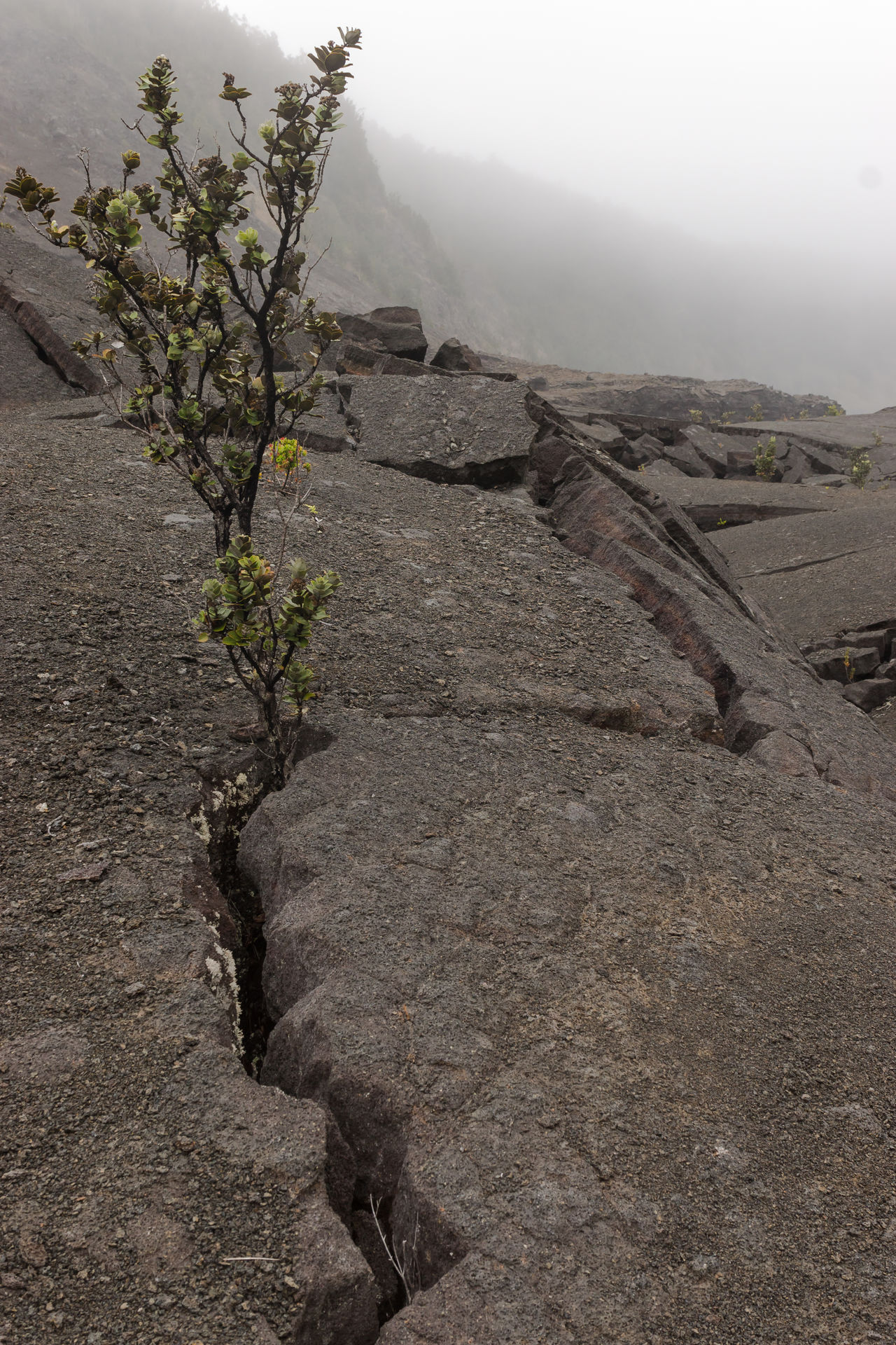 Beauty In Nature Big Island Crack Day Fog Gritty Hawaii Landscape Lava Lonely Nature No People Outdoors Physical Geography Resist Rock Scenics Sky Tranquil Scene Tranquility Volcano National Park