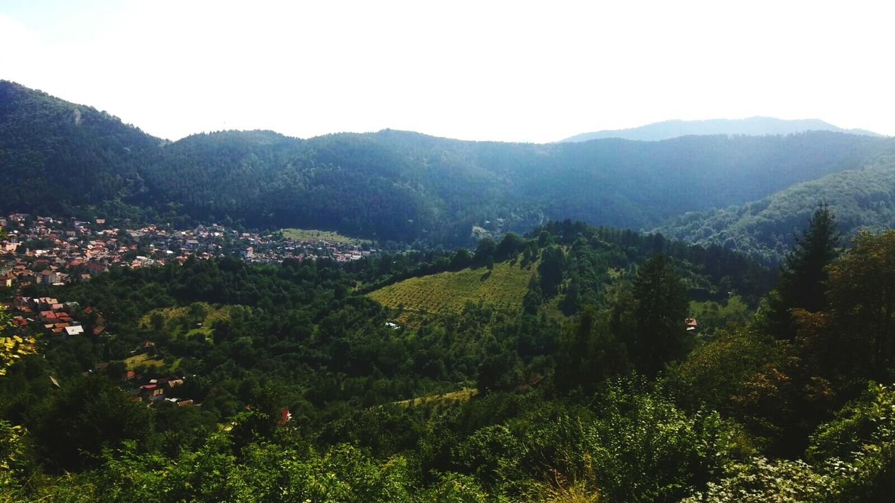 Nature Green Color Day Beauty In Nature Mountain Brașov,România Romanian Lands