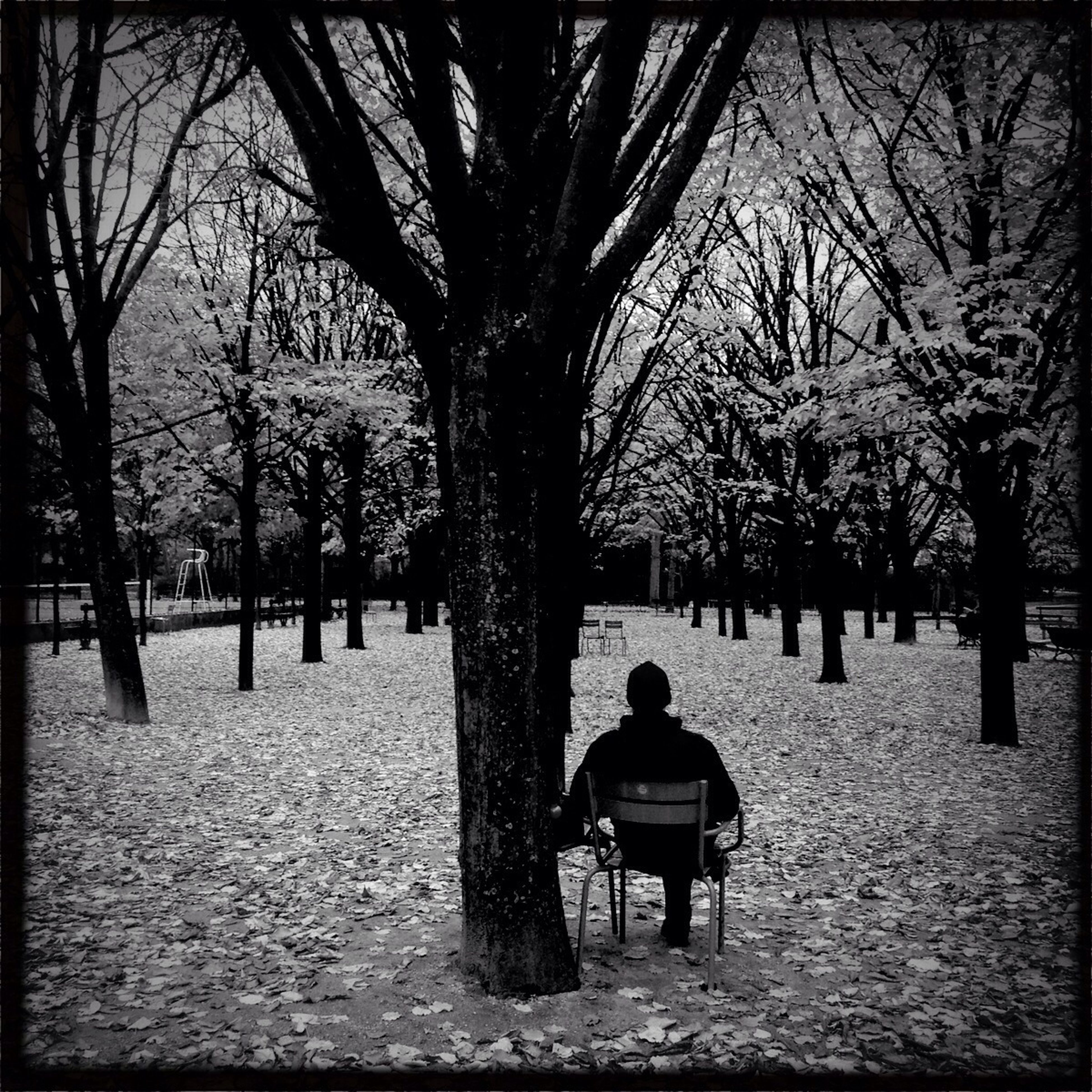 tree, rear view, men, lifestyles, bare tree, leisure activity, bench, tree trunk, person, full length, season, walking, park - man made space, sitting, winter, park, treelined, nature