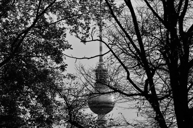 Berlin Day Fernsehturm Herbst Mitte No People Outdoors S/w Silhouette Tall - High Tower Tree Trzoska