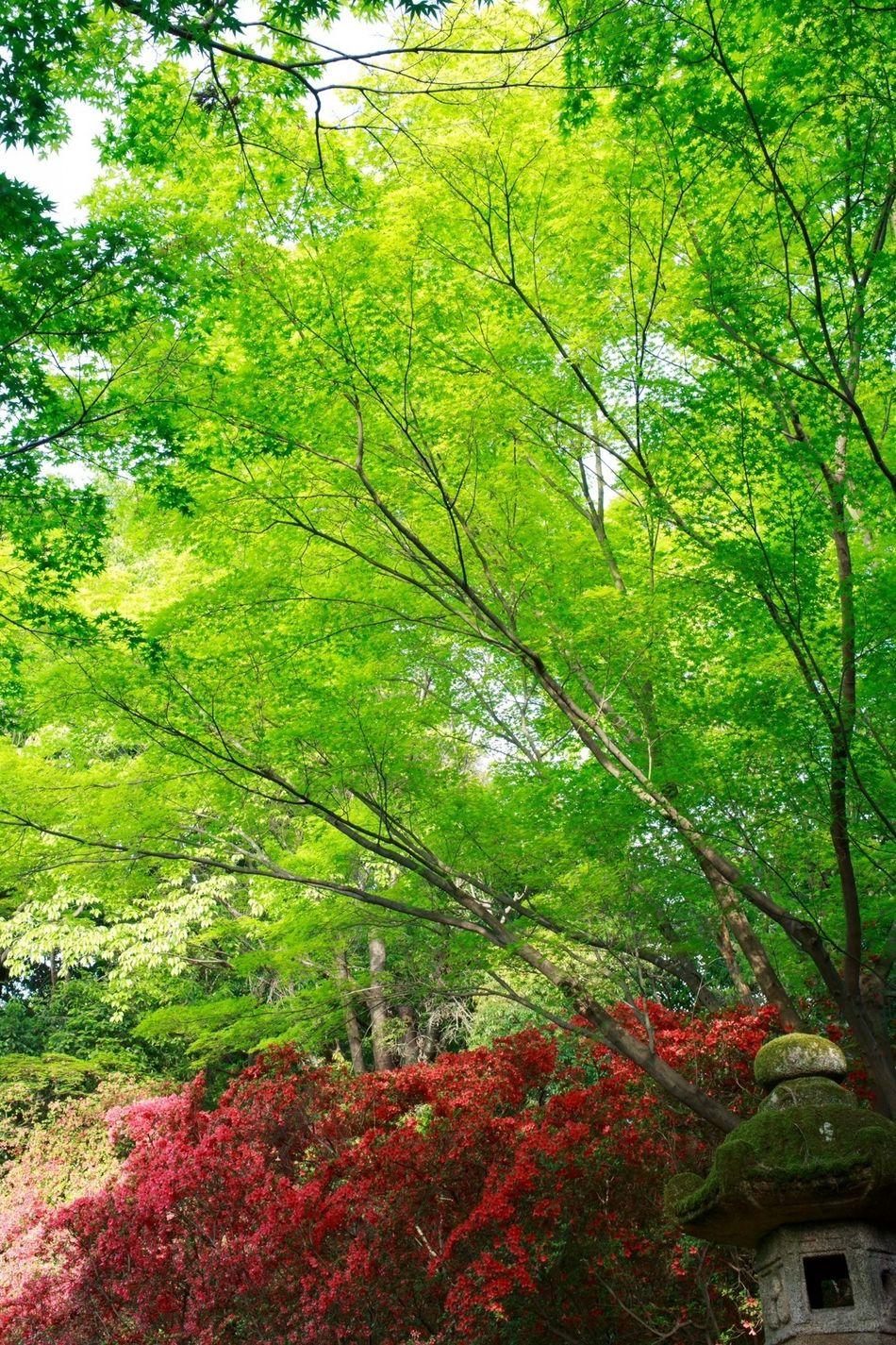 EyeEm Nature Lover Landscape_Collection Green TreePorn