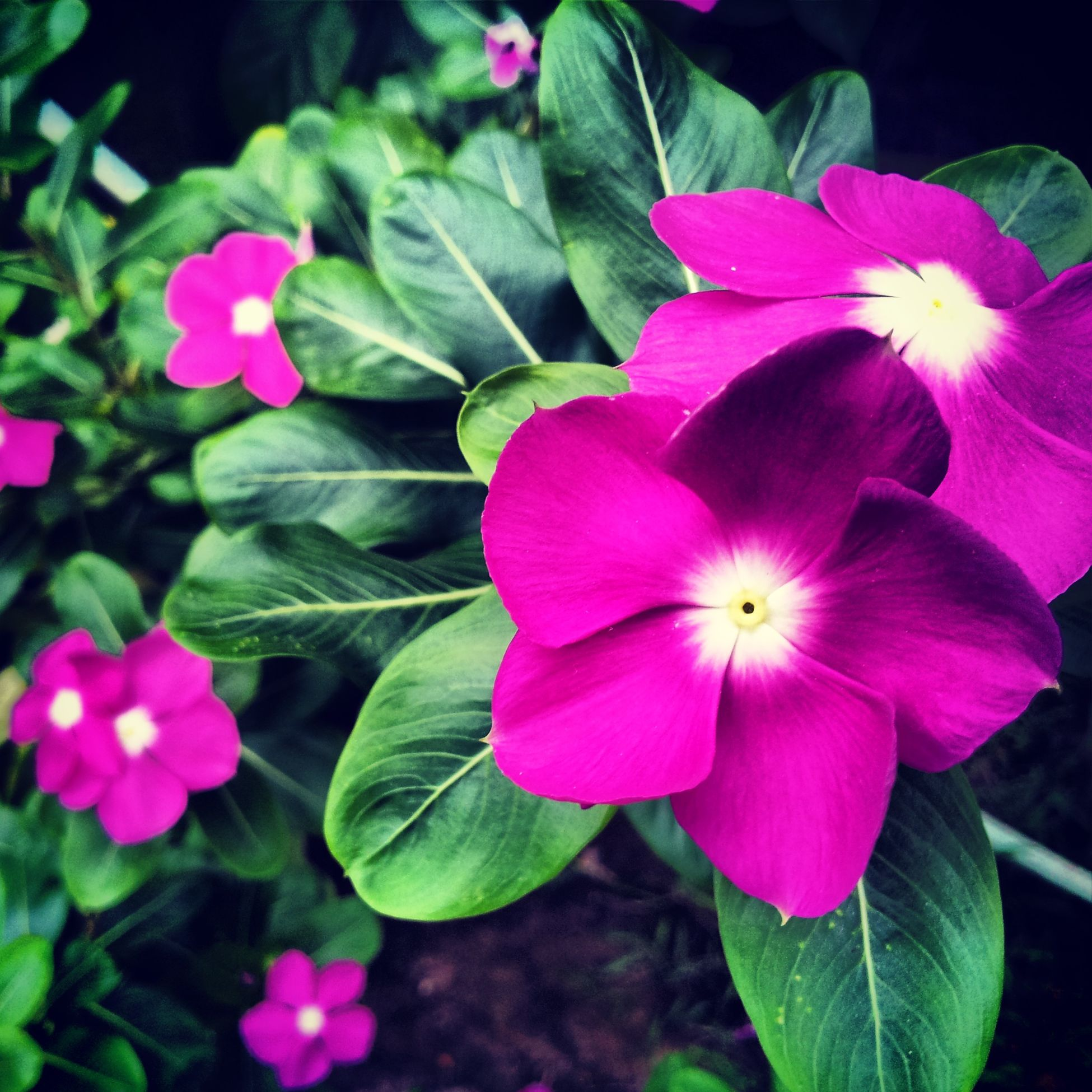 Life's full of colors Flowers Galaxys2 Photooftheday Photography