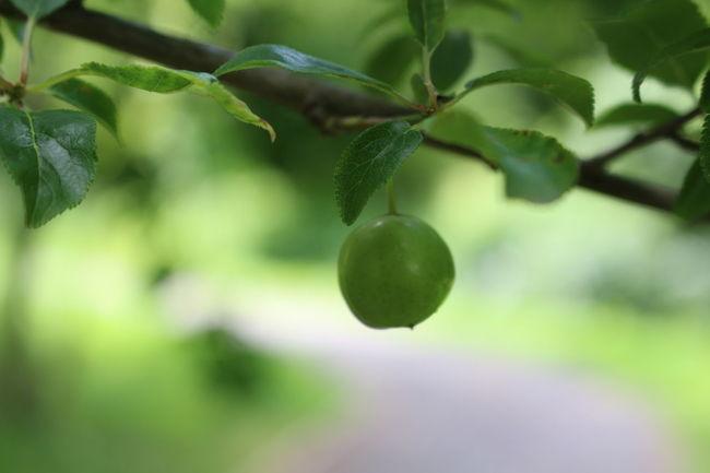 Garden Photoshoot Naturelovers Taking Photos Cool_capture_ Fruct Apple Green Color Canon_photos