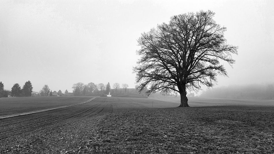 Tree Nature Sky No People Day Single Tree Blackandwhite Landscape Outdoors Solitary