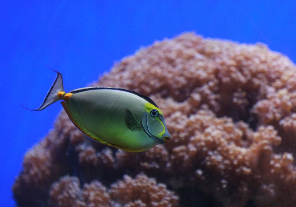 Beautiful stock photos of einhorn,  Blue,  Close-Up,  Fish,  Focus On Foreground