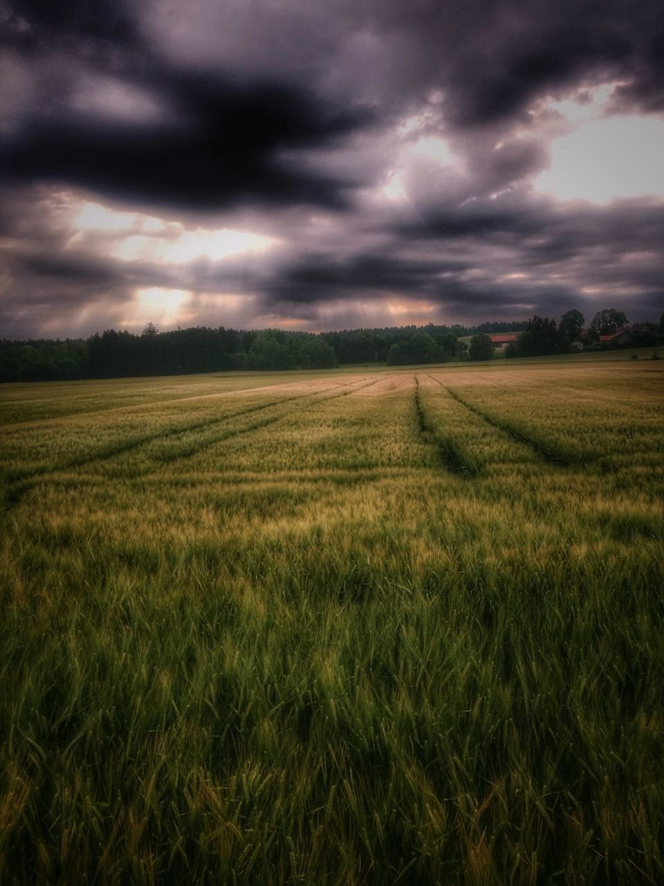 field, agriculture, landscape, tranquil scene, rural scene, nature, tranquility, crop, beauty in nature, farm, sky, scenics, cloud - sky, growth, cultivated land, no people, outdoors, storm cloud, green color, day, cereal plant, tree, grass