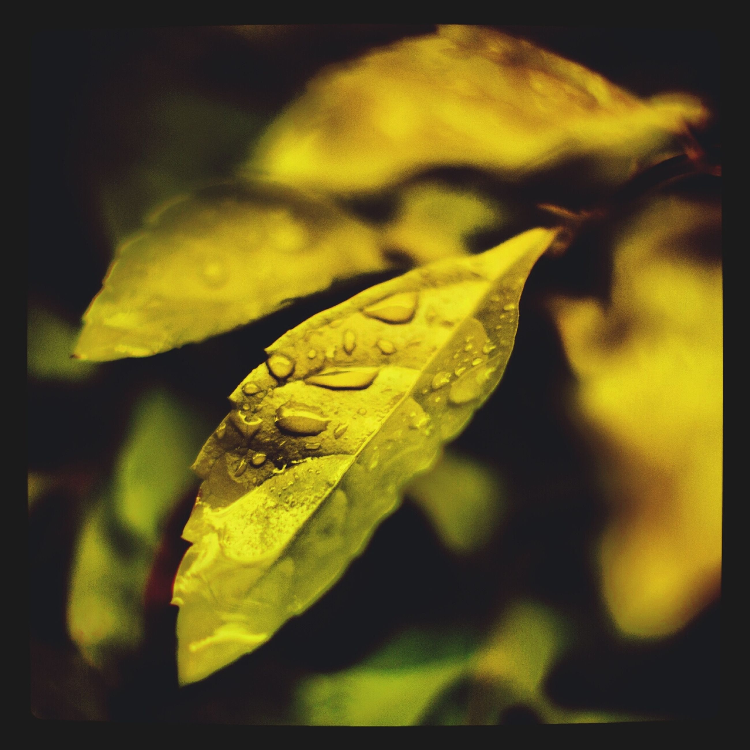 leaf, close-up, yellow, focus on foreground, nature, green color, leaf vein, growth, selective focus, beauty in nature, plant, auto post production filter, transfer print, fragility, drop, wildlife, leaves, no people, outdoors, one animal