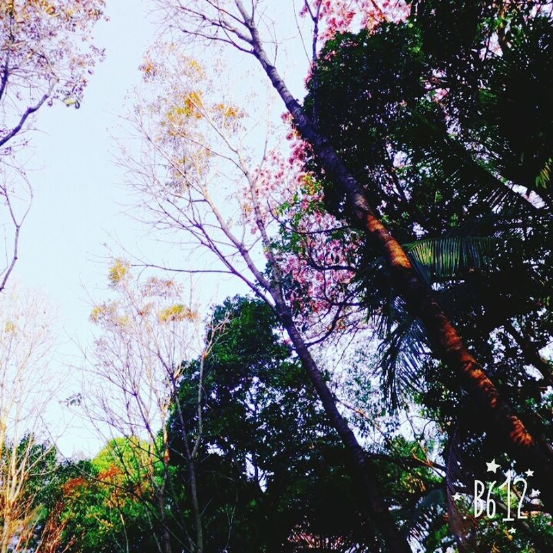 Parque Vicentina Aranha People Nature Relaxation Happiness Tree