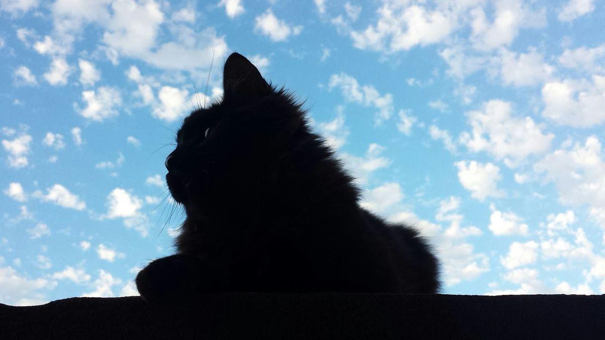 Beautiful Animals  Cat Details Beautiful Sky The Purist (no Edit, No Filter) Silluet