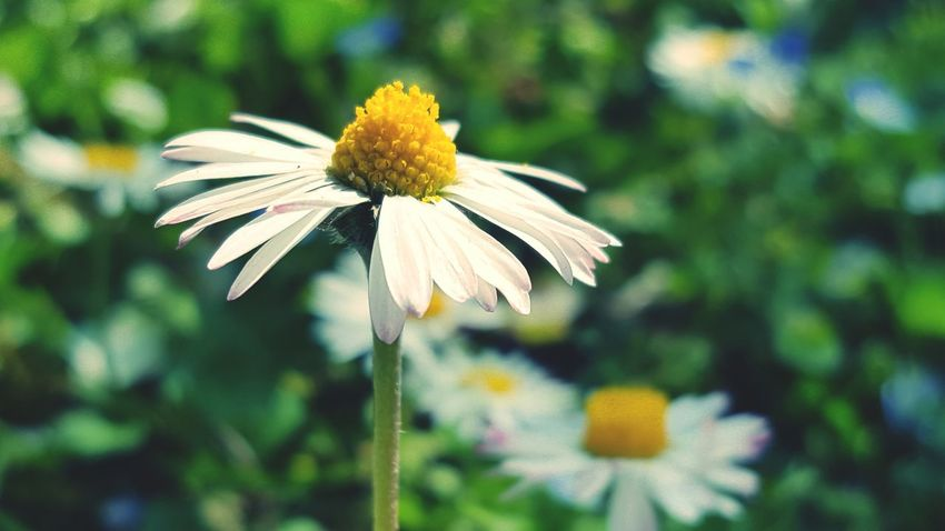 Flower Fragility Focus On Foreground Nature Outdoors Day Flower Head Beauty In Nature Petal Plant No People Coneflower Close-up Freshness Eastern Purple Coneflower