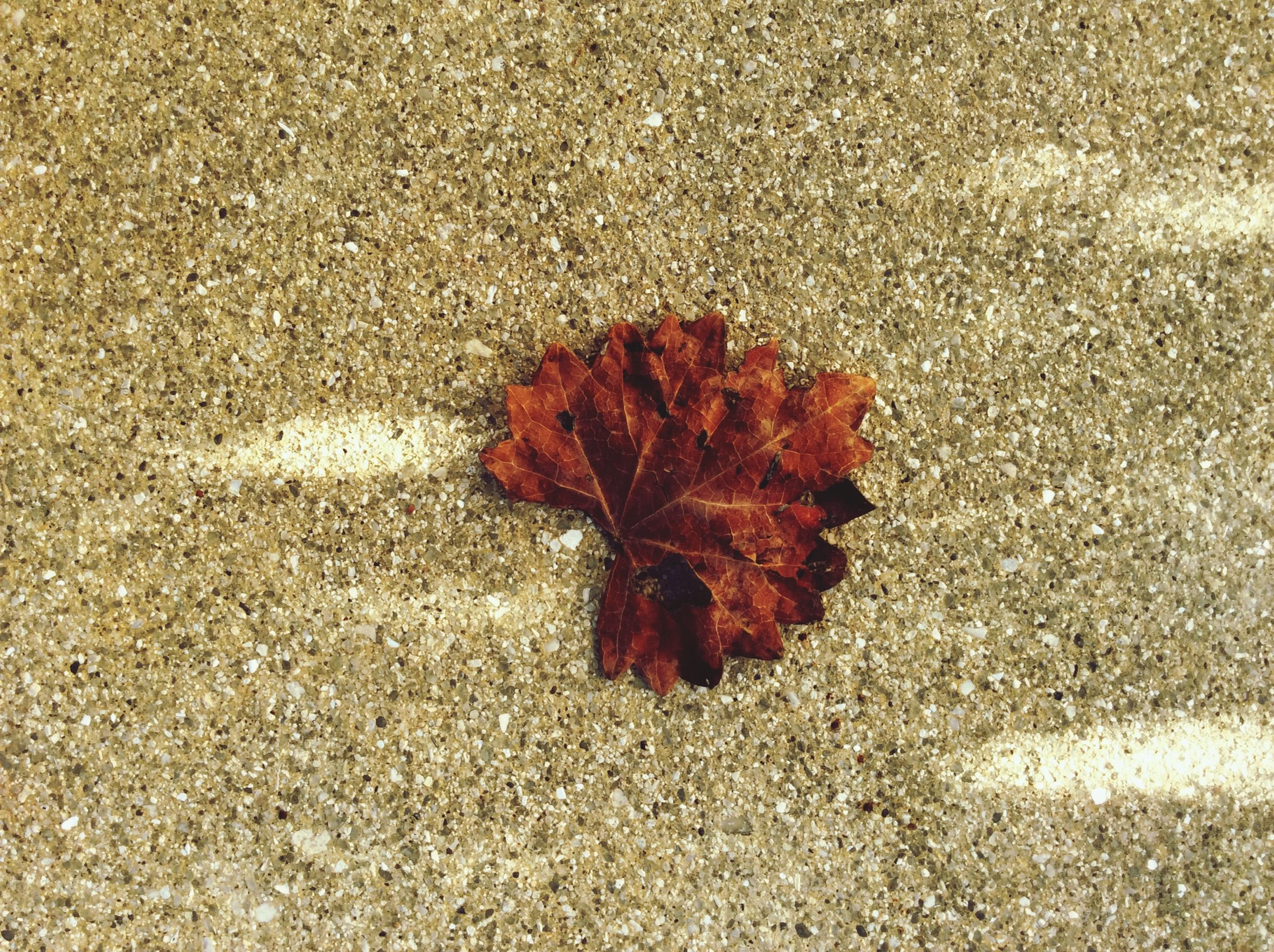 leaf, autumn, change, dry, season, fallen, leaf vein, leaves, high angle view, maple leaf, nature, close-up, ground, natural pattern, street, asphalt, textured, fragility, falling, day