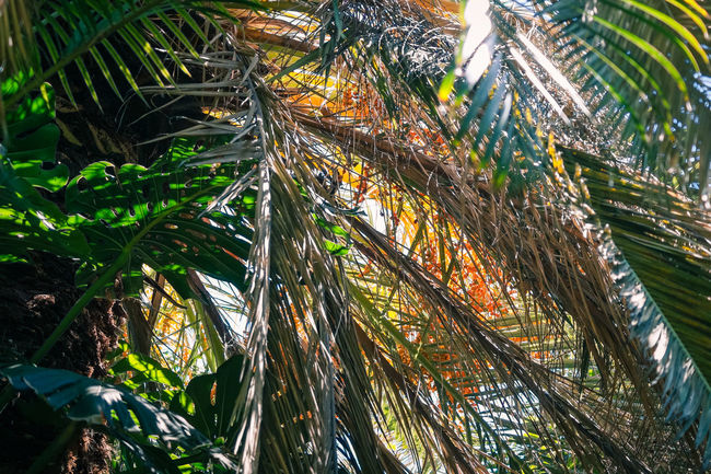 Beautiful Day Enjoying The View EyeEm Nature Lover From My Point Of View Palm Trees Palms Plants Relaxing Moments Sun Sunlight Sunlight And Shadow Suny Day Travel Tropical Paradise Tropical Plants