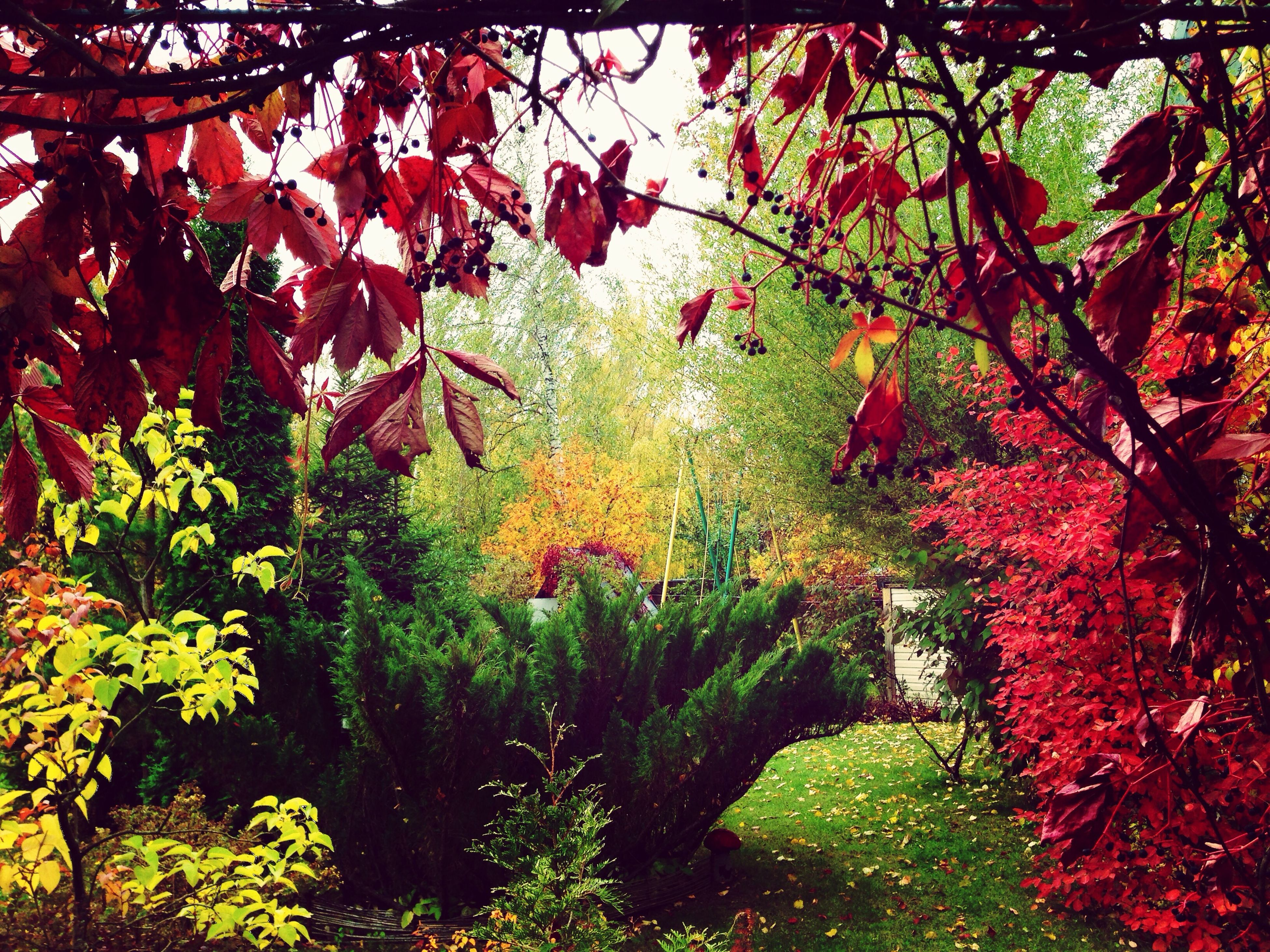 tree, branch, growth, beauty in nature, red, leaf, nature, autumn, tranquility, change, flower, season, lush foliage, freshness, green color, plant, tranquil scene, scenics, day, no people