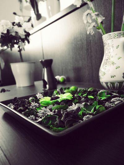 Herb Indoors  Plant Leaf Freshness