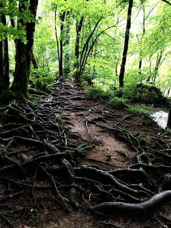 The Journey Is The Destination Un petit chemin entravé par des racines!!😉 Jura Tuff Mesnay