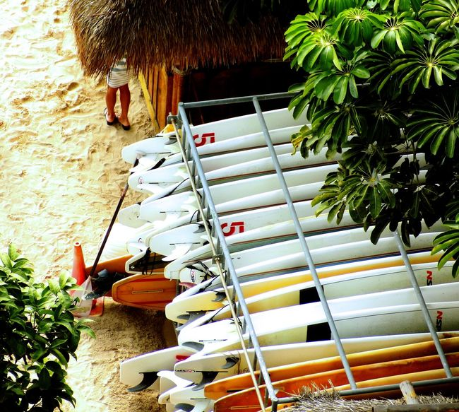 Building Exterior Day Hawai'i Hawaii Holiday Land Landscape Landscape #Nature #photography Landscape_Collection Landscape_photography Landscapes My Holidays Outdoors Sunlight Surf Surf Photography Surfboard Surfboards Surfing Taking Photo Taking Photos Taking Pictures Tree