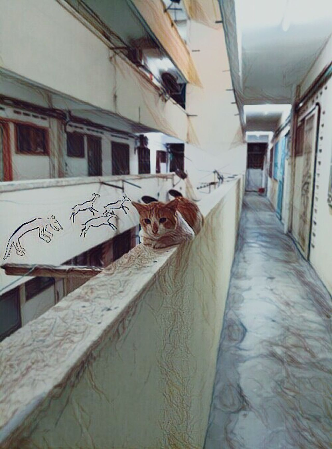 Lonely Indoors  No People Architecture Day Cat Catsofinstagram Cat Lovers Catstagram Animals Animal Photography Animal Portrait Animalsofinstagram Feline Feline Portraits FelineDomesticus Feline, Tomcat, Tom, Kitten, Mouser; Alley Cat; Kitty, Furball; First Eyeem Photo