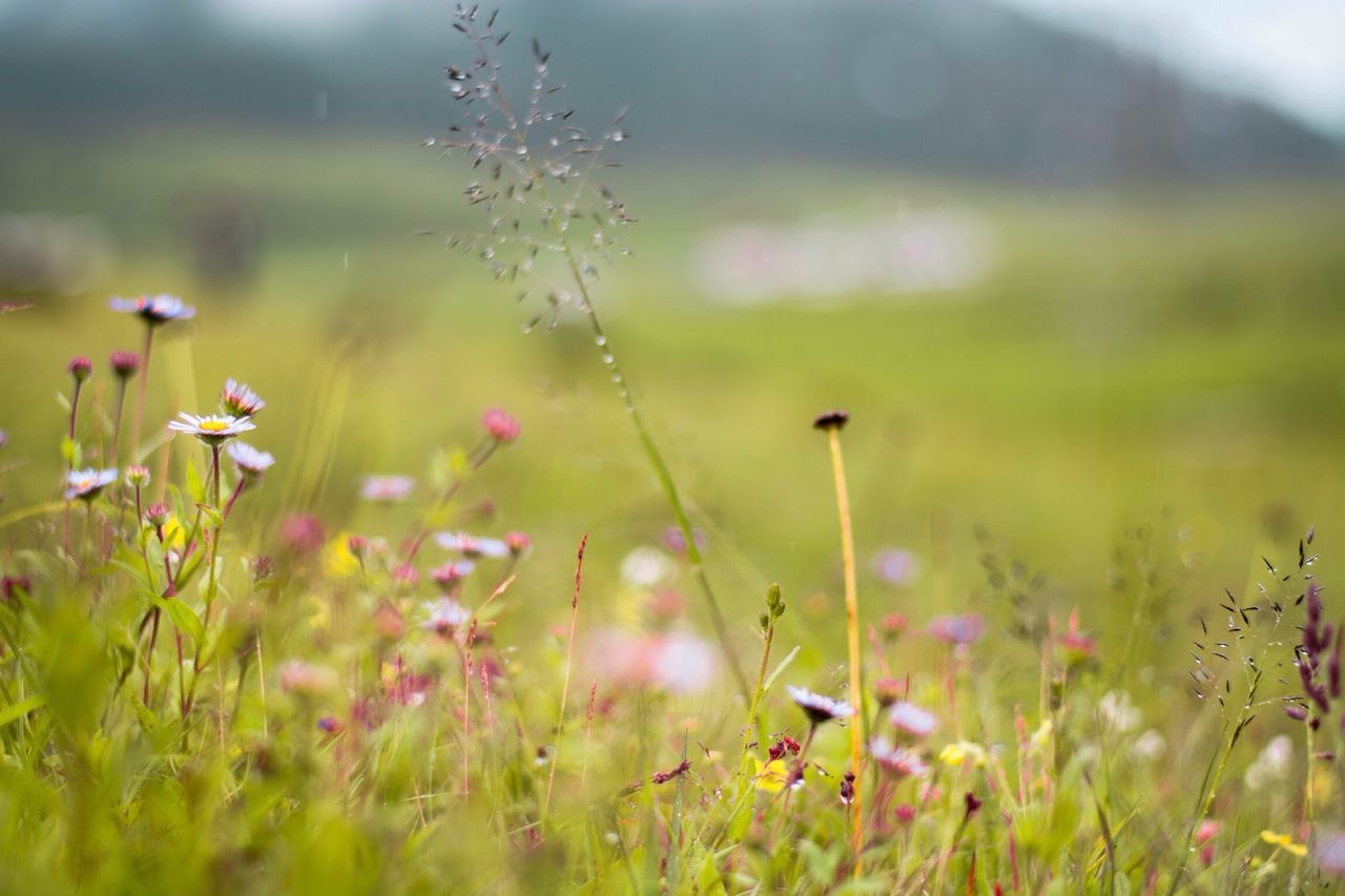 Flower Growth Nature Grass Beauty In Nature Plant Green Color Fragility Field Freshness No People Day Flower Head Wildflower Close-up