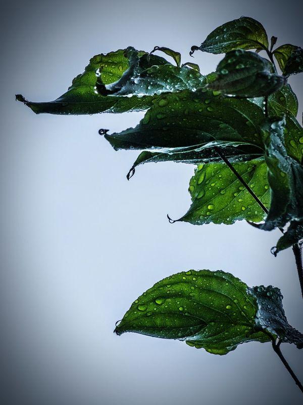Wet Leave After The Rain Rain Raindrops Rainy Days