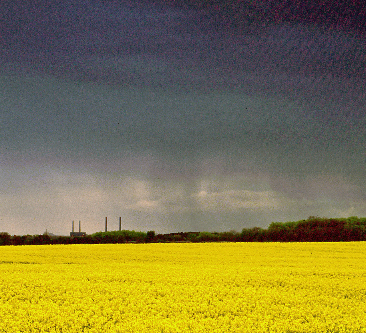 rainstorm Agriculture Cloud - Sky Crop  Cultivated Land Day Field Fragility Growth Horizon Over Land Idyllic Landscape Nature No People Non-urban Scene Outdoors Rainstorm, Rural Scene Scenics Sky Tranquil Scene Tranquility Yellow