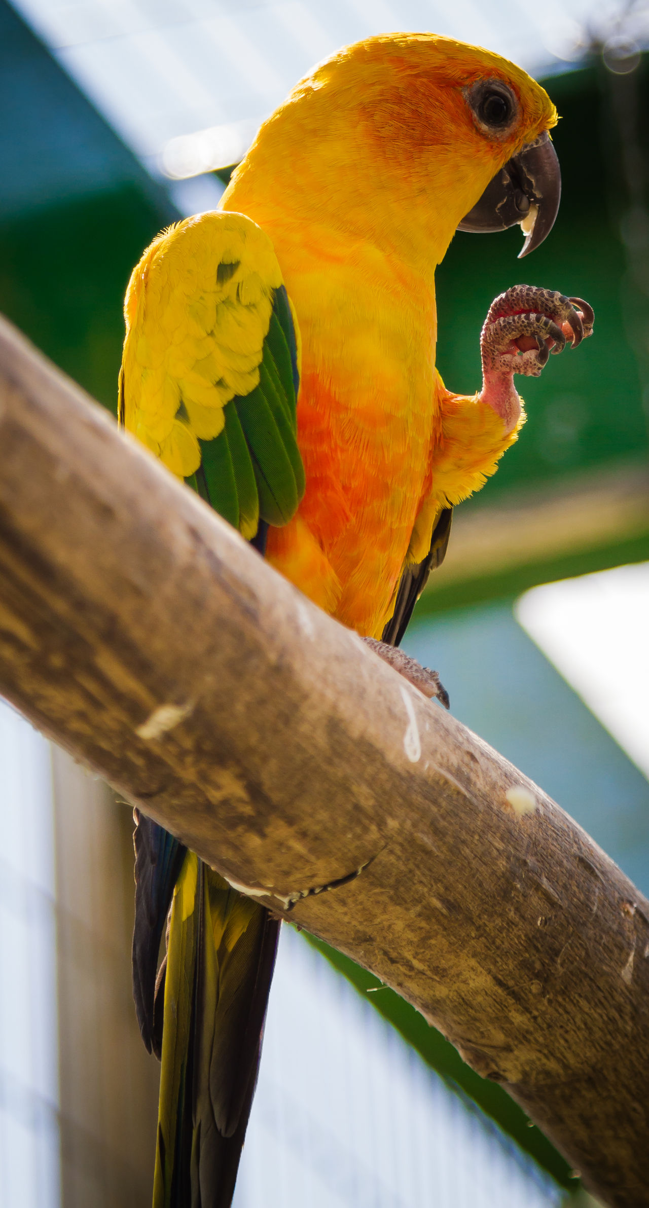 Animal Themes Animal Wildlife Animals In The Wild Beauty In Nature Bird Branch Close-up Day Focus On Foreground Gold And Blue Macaw Macaw Nature No People One Animal Outdoors Parrot Perching Rainbow Lorikeet Tree