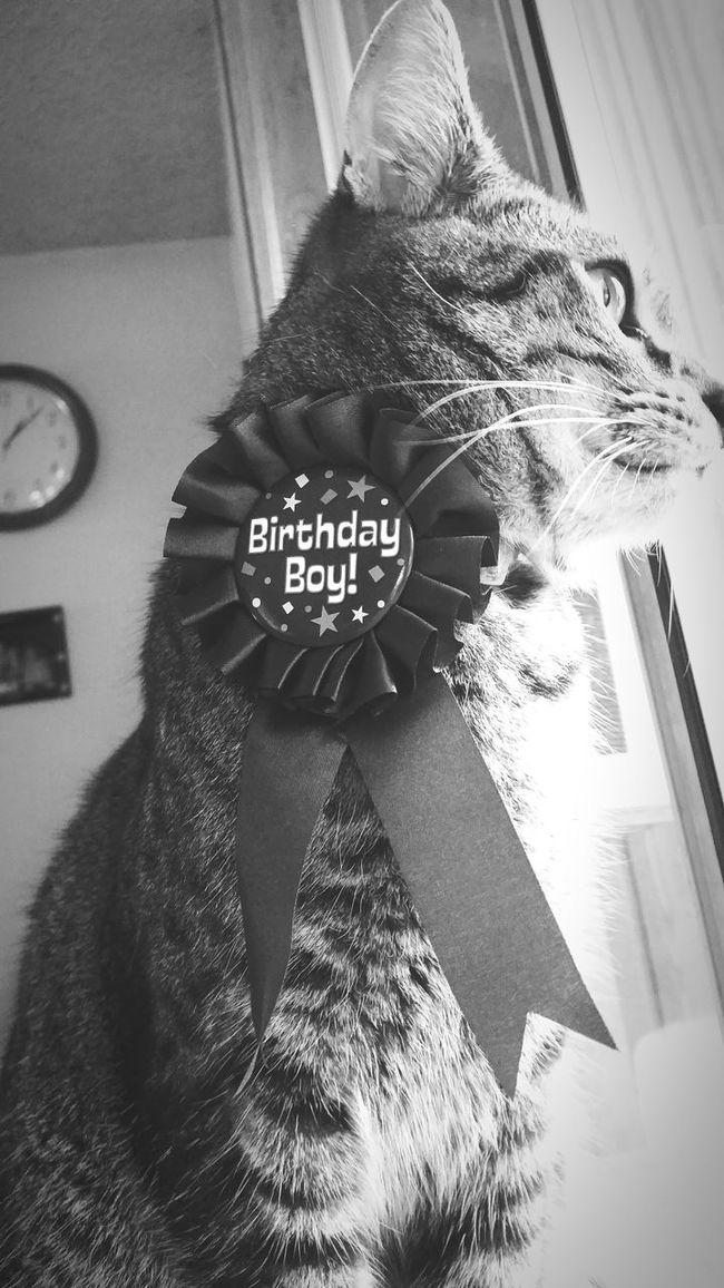 HappyBirthday Birthdaycat Birthdayboy Kitty Lovehim Myworld