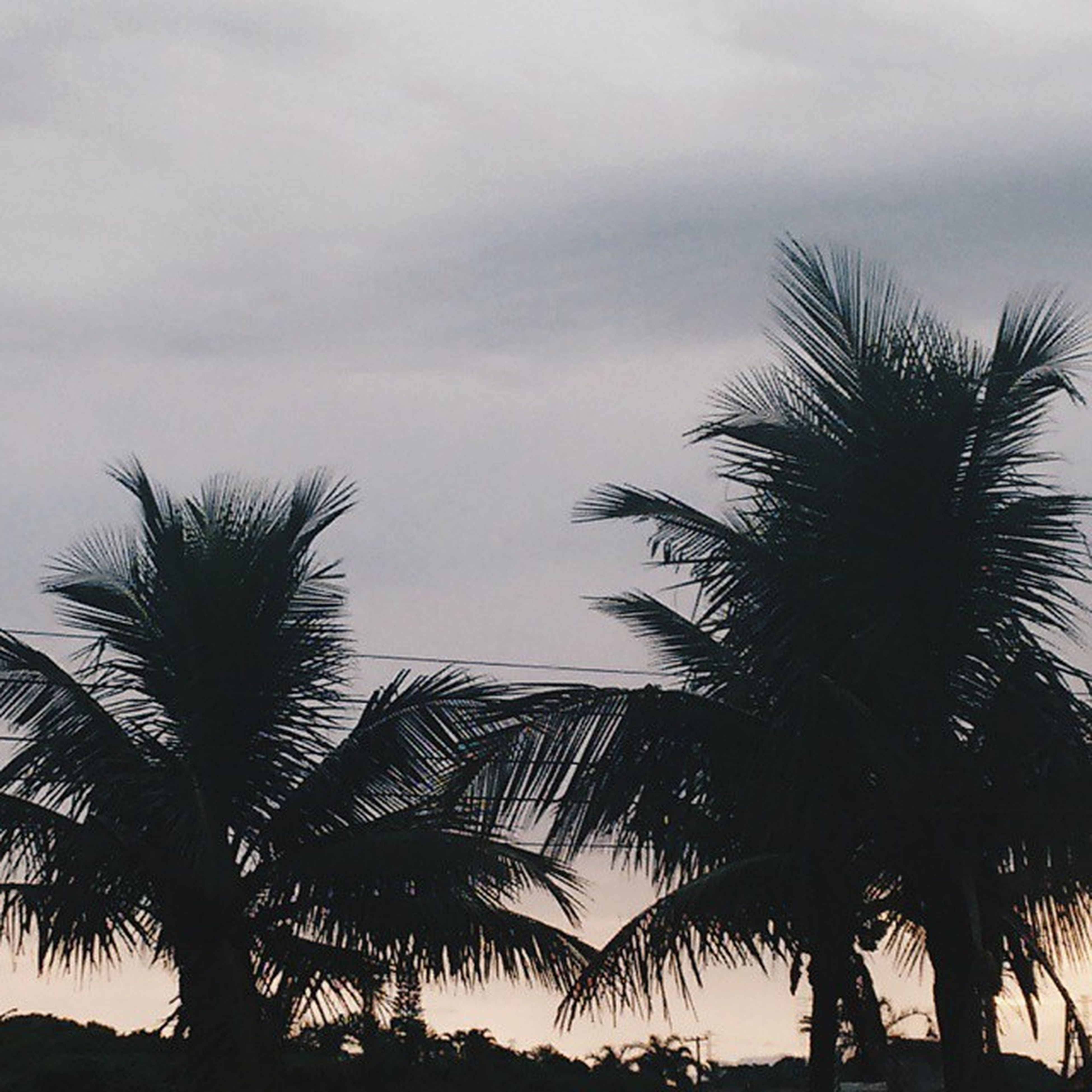 palm tree, tree, low angle view, sky, silhouette, growth, cloud - sky, coconut palm tree, nature, tranquility, beauty in nature, cloudy, scenics, palm leaf, cloud, tree trunk, tranquil scene, tropical climate, tropical tree, palm frond
